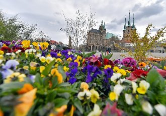 16 April 2021, Thuringia, Erfurt: A flower bed adorns Domplatz square before the start of the Federal Horticultural Show (BUGA). From 23 April to 10 October 2021, the summer festival with horticultural showcase is to take place on two exhibition sites in Erfurt. In addition, 25 BUGA outdoor locations are planned throughout Thuringia. Photo: Martin Schutt\/dpa-Zentralbild\/ZB