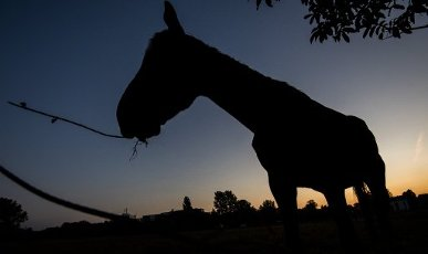 dpatop - 01 October 2020, Lower Saxony, Laatzen: A horse is grazing on a paddock on the Leinemasch in the region of Hannover shortly before sunrise. Photo: Julian Stratenschulte\/dpa