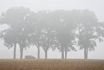 01 October 2020, Brandenburg, Sieversdorf: Morning fog veils the landscape with an avenue in the district (Oder-Spree). Photo: Patrick Pleul\/dpa-Zentralbild\/ZB