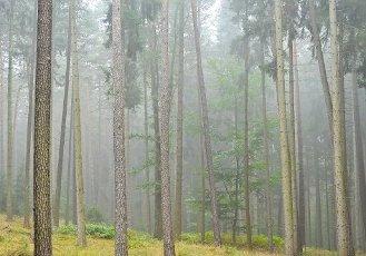 01 October 2020, Brandenburg, Sieversdorf: Morning mist moves through a mixed forest in the district (Oder-Spree). Photo: Patrick Pleul\/dpa-Zentralbild\/ZB