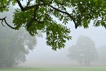 01 October 2020, Brandenburg, Sieversdorf: Morning fog veils the landscape in the district (Oder-Spree). Photo: Patrick Pleul\/dpa-Zentralbild\/ZB