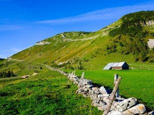Alpine pasture area, Trattberg, Salzburger Land, Austria
