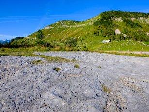 Rock slab through glacier grinding in the alpine pasture area, Trattberg, Salzburger Land, Austria