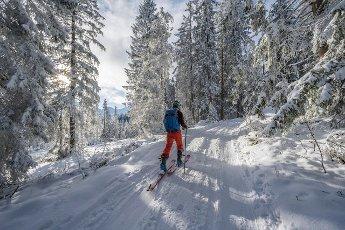 Ski tourers climbing in the snowy forest, ascent to Kreuzeck, Wetterstein mountains, Garmisch-Partenkirchen, Bavaria, Germany