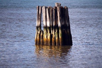 The wooden protections in the calm water