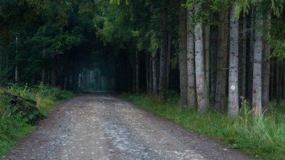Path into the mountains. Old road into the forest. Natural tunnel of trees