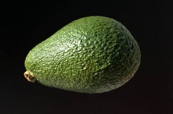 Avocado,  Persea americana