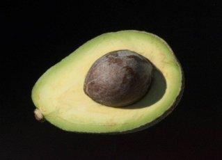 Avocado,  Persea americana,  Exotische Frucht,  exotisch,  Suedfrucht,
