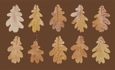 realistic autumn leaves for fabric design. texture decoration. Vector paint. Vector template collection. Nature background. Design element. Grain pattern.