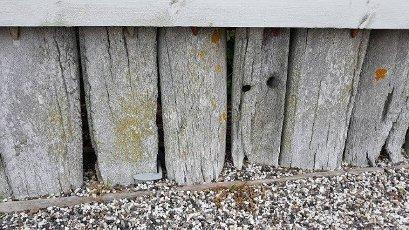 Alte historische Zaeune aus Walfischknochen die immer noch im Norden zu finden sind. Old historical fences made of whale bones that can still be found in the north.