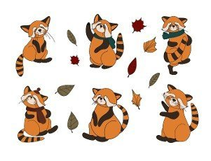Little panda,  red panda,  cat bear. Character cute beast. Funny animals. Autumn decoration. illustration isolated on white background.