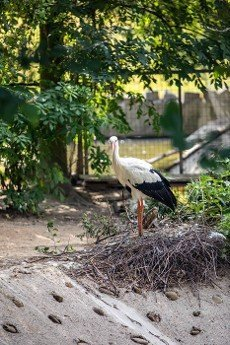 The white stork  is a large bird in the stork family,  Ciconiidae. Its plumage is mainly white,  with black on the bird\\\'s wings.