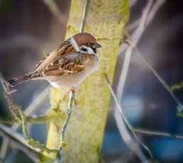 Closeup of a sparrow sitting on the branch of a tree
