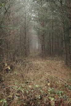 mysterious ground roud through a forest during foggy day in winter season