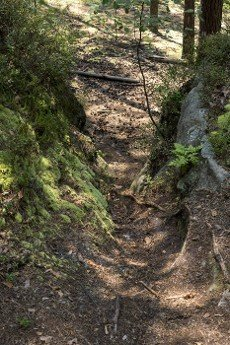 ground path between rock formation made from sandstones inside of a forest during summer season in pikelko nature reserve in Poland