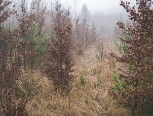 small trees growing on a clearing in the forest between high grass