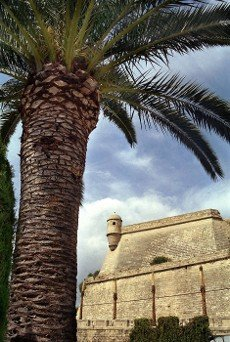 Old town of Palma de Mallorca with city wall and palm tree