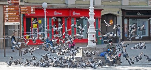 10.04.2020., Zagreb, Croatia - Zagreb citizens spend their time in interesting ways. While some feed pigeons, others spend time playing with a balloon. Photo: Sanjin Strukic/PIXSELL