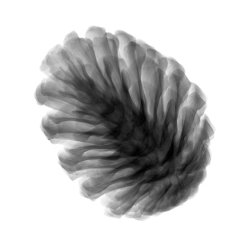 Fir cone, X-ray