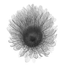 Aster, X-ray