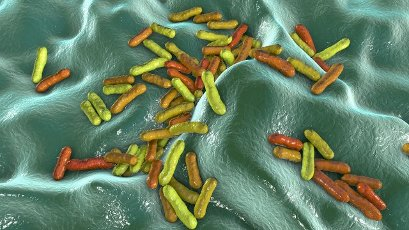 Cutibacterium (formerly Propionibacterium) bacteria, computer illustration. These are an example of non-pathogenic bacteria found on human skin, where they are well adapted to the natural acidity. An example is Cutibacterium acnes, found in the hair