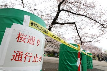 A street of cherry blossoms is closed as a safety precaution against the new coronavirus at Ueno Park in Tokyo, Japan on March 31, 2020. (Photo by Yohei Osada/AFLO) Pictured: GV,General View Ref: SPL5159865 310320 NON-EXCLUSIVE Picture by: ...