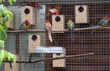 MOSCOW REGION, RUSSIA - AUGUST 12, 2020: Parrots kept in a temporary holding facility for wild animals run by Moscow\'s Natural Resources and Environmental Protection Department in the village of Andreikovo. Animals are brought here for various