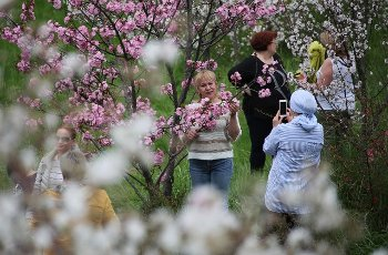 SOCHI, RUSSIA â APRIL 20, 2021: A woman poses for a photo by a blooming cherry blossom at the Sochi Arboretum. Dmitry Feoktistov\/TASS