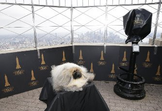 Wasabi the Pekingese visits the top of the Empire State Building after winning Best In Show the day before at the 145th annual Westminster Kennel Club Dog Show at the Lyndhurst Estate in Tarrytown, New York on Monday, June 14, 2021. This years Westminster Dog Show was delayed due to COVID-19 and next years competition will return again to Madison Square Garden. Photo by John Angelillo