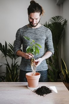 Young man gardening avocado plant in flower pot while standing at home