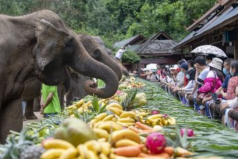 "(200812) -- XISHUANGBANNA, Aug. 12, 2020 (Xinhua) -- Elephants eat fruits and vegetables during celebrations of the World Elephant Day at the Wild Elephant Valley scenic spot in Dai Autonomous Prefecture of Xishuangbanna, southwest China\'s Yunnan Province, Aug. 12, 2020. TO GO WITH ""China\'s Yunnan celebrates World Elephant Day"" (Photo by Chen Xinbo\/Xinhua"