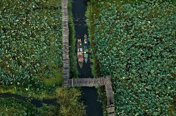 (201001) -- SRINAGAR, Oct. 1, 2020 (Xinhua) -- Aerial photo taken on Oct. 1, 2020 shows boatmen rowing their boats containing vegetables on the Dal Lake in Srinagar city, the summer capital of Indian-controlled Kashmir. (Xinhua\/Javed Dar