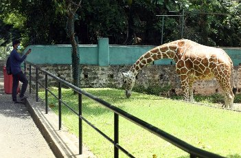 (210731) -- COLOMBO, July 31, 2021 (Xinhua) -- A man visits the reopened Dehiwala Zoo in Colombo, Sri Lanka, on July 31, 2021. The Dehiwala Zoo in Colombo reopened to public recently after it was closed to prevent the spread of the coronavirus in early May. (Photo by Ajith Perera\/Xinhua